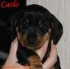 cw16-carlo