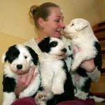 Hundekekse von Nadine Schulz_201
